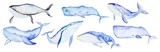 Watercolor whales set