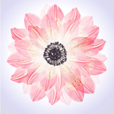 Seamless floral pattern with pink flower petal - 133383797