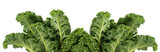 Green leafy kale vegetable