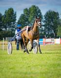 Trabrennsport - Pferd und Jokey auf der Bahn, Hochformat - 133400723