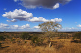 African savannah under a blue sky