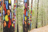 Painted trees on the forest of Oma, Urdaibai Biosphere Reserve, Biscay, Spain.