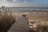 Dog on a pier on the shore of a frozen lake in winter