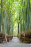 Bamboo forest in Arashiyama, Kyoto Japan