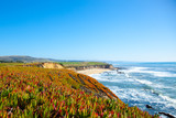 Beach and seaside cliffs at Half Moon Bay California. Ice plants. Sour fig plants.