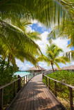 Bora Bora, Walkway to sea and bungalows / villas.  Palm trees framing the picture to luxury thatched rooms - 133456961