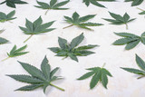 Abstract background with cannabis leaves over white woode backgr