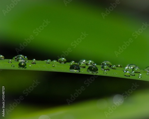 Leinwanddruck Bild Plantleaf