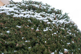 Albero ricoperto di neve