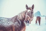 horses - 133544770