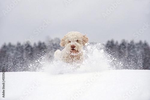 Poster Hund läuft durch tiefen Schnee