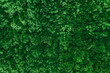 green moss for background texture, decorated wall