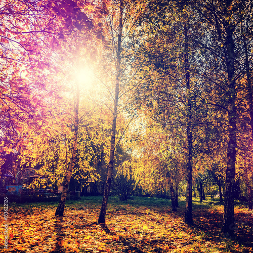 In de dag Oranje eclat wonderful autumn landscape. majectic trees with colored leaf. retro style. instagram effect. artistic creative image. used as background