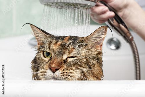 Poster Cat bath