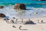 Penguins bathe in the cold sea at Cape Town's boulders beach.
