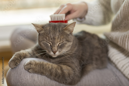 Poster Woman combing pet cat