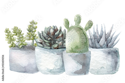 Watercolor cactus and succulent set - 133654356
