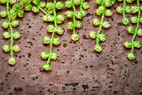 Green leaves with a lacy fringe on the brown cork background.