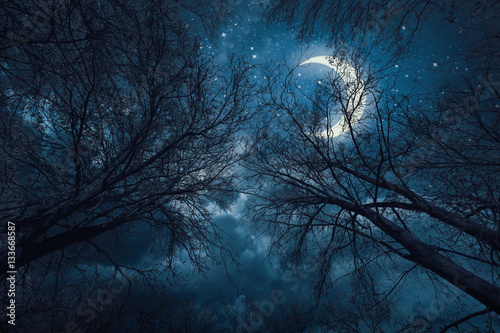 Papiers peints Bleu nuit Night sky with trees and moon
