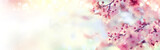 Fototapety Spring border or background art with pink blossom. Beautiful nature scene with blooming tree and sun flare