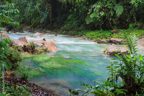 Rio celeste and vegetation Poster