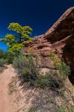 Negro Bill's Trail near Moab.