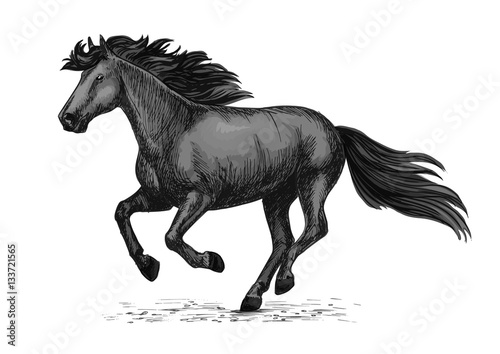 Poster Black wild horse running on races vector sketch