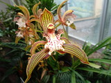 Fototapety yellow and red orchid flower