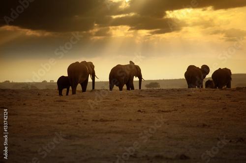 Fotobehang Elephants in Amboseli national park
