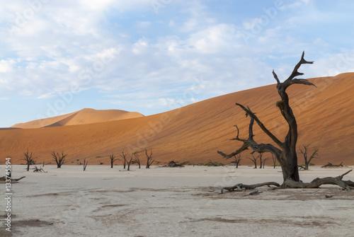 Poster Bäume im Deadvlei, einer von Namibsand-Dünen umschlossenen Ton-Pfanne in der Nam