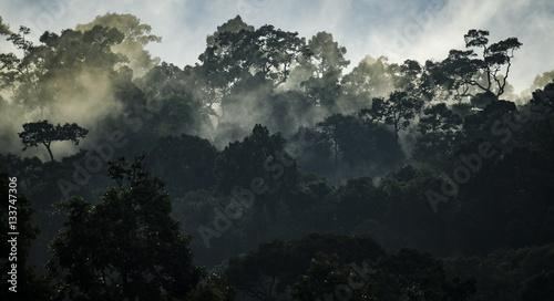 Landscape of Tropical rain forest, Asia - 133747306
