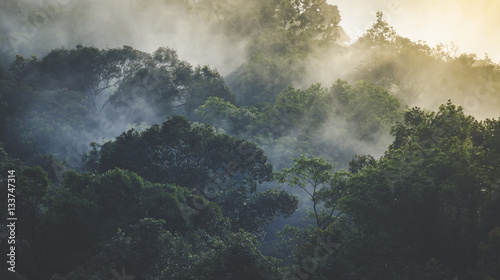 Landscape of Tropical rain forest, Asia - 133747314