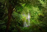 Fototapety Beautuful waterfall in jungle tropic rain forest.