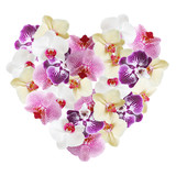 Postcard Valentines Day. Heart of flowers orchid