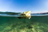 Trash, cans in sea, pollution, ocean, Adriatic