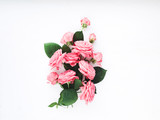 Bouquet of roses on white background.