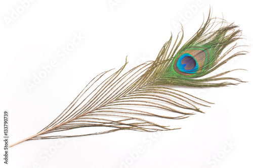 Fotobehang Pauw Peacock feather isolated on white