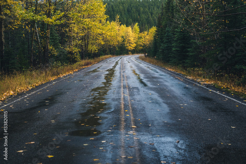 Road leading to an autumn forest.