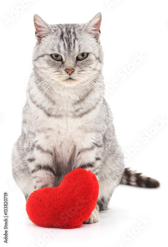 Poster Gray kitten and red heart.