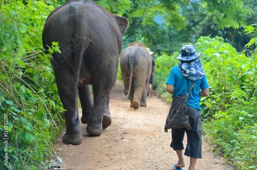 Poster Mit dem Elefant auf Wanderschaft