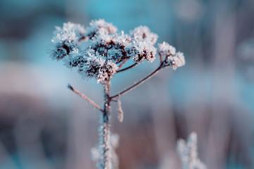 Gefrorene Blume mit Eiskristallen