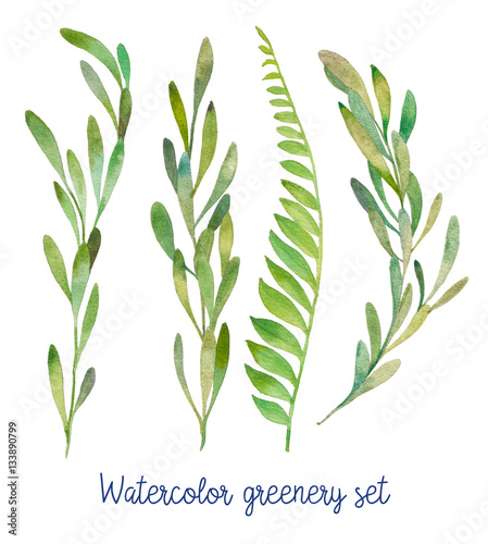 Watercolor greenery set. Hand drawn wild green plants isolated on white background.