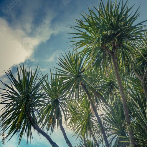 Fototapeta Palm Trees Against Sky