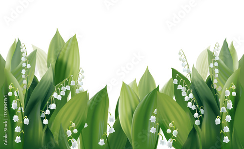 Fototapeta Convallaria majalis - Lilly of the valley. Hand drawn vector illustration of white spring flowers and lush foliage on white background.