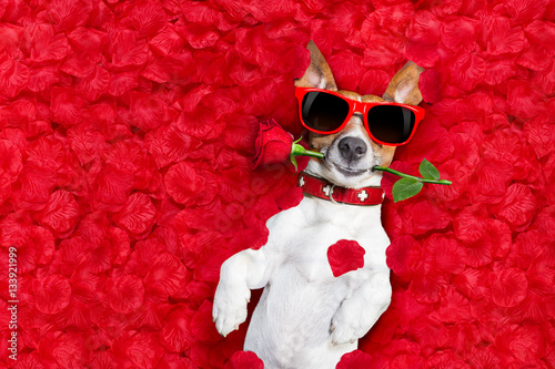 Poster valentines dog in love