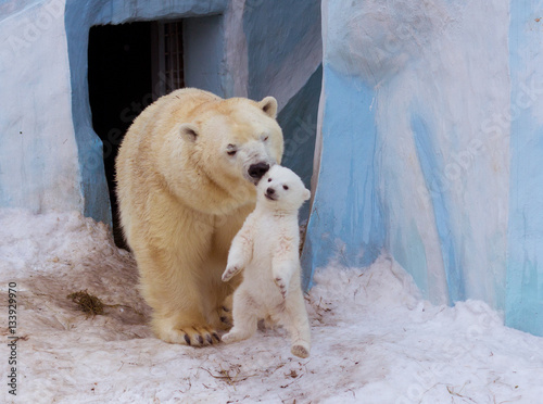 Aluminium Ijsbeer Polar bear with mom