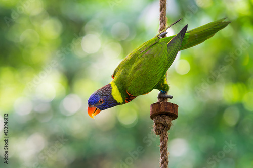 Parrot on tree branch Poster