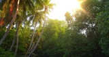 Bright sun light inside tropical forest. Palm trees and dense jungle vegetation - 133965909
