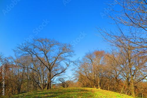 Poster 秋の山の公園の風景1