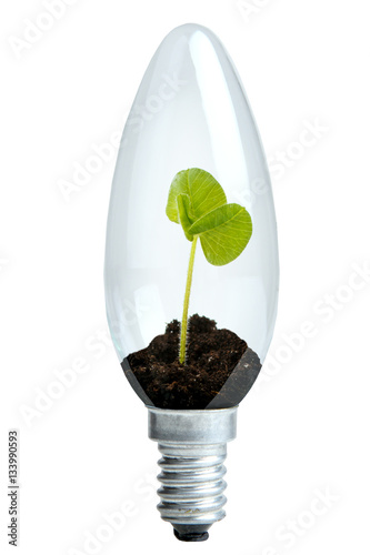 Poster Light bulb with beautiful green plant inside isolated on white background